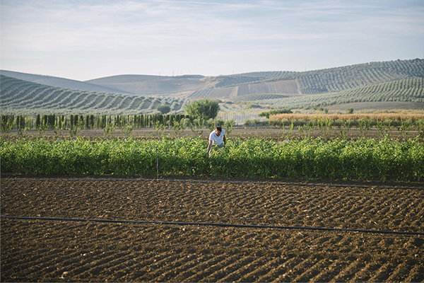 The University of Seville, Econatur and Solutia design a smart platform to implement a new eco-sustainable agriculture model